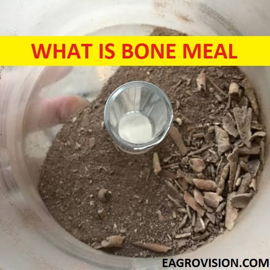 WHAT IS BONE MEAL