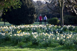 Nature in Walpole Park