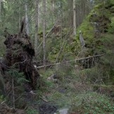 Trolldalen, nere i ravinen