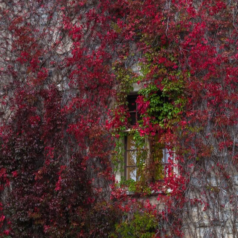 Fönstret på  slottet