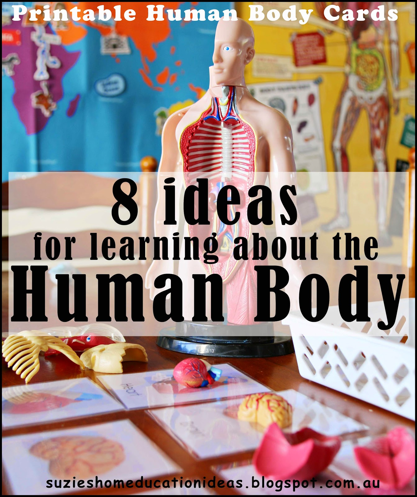 Helping Kids Understand The Human Body