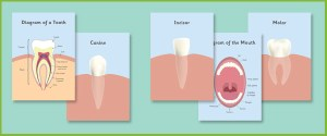 Early Learning Resourcess Teeth Posters | Dentist Role Play