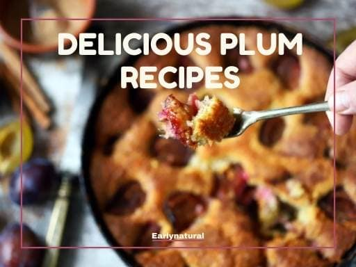 How To Make Delicious Recipes Use Plum Products