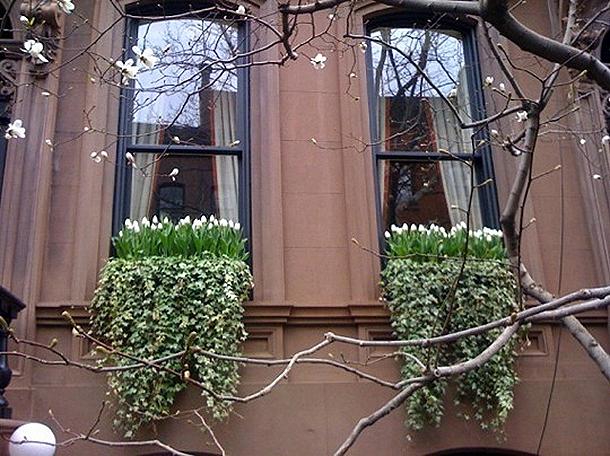 westvillage-newyorkcity-tulips-ivy-windowbox-brownstone_rect540