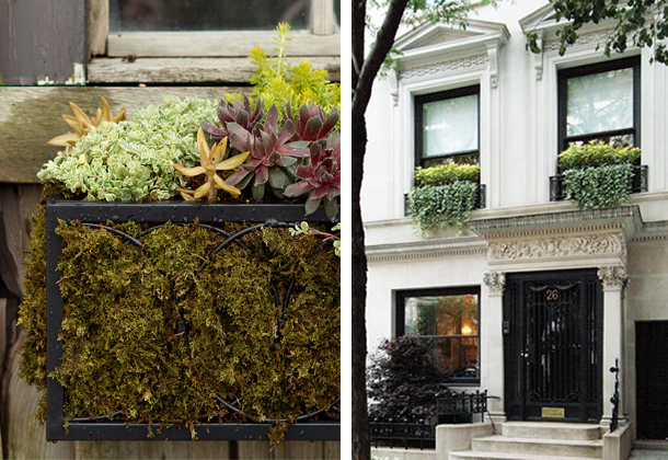 window boxes - diptych