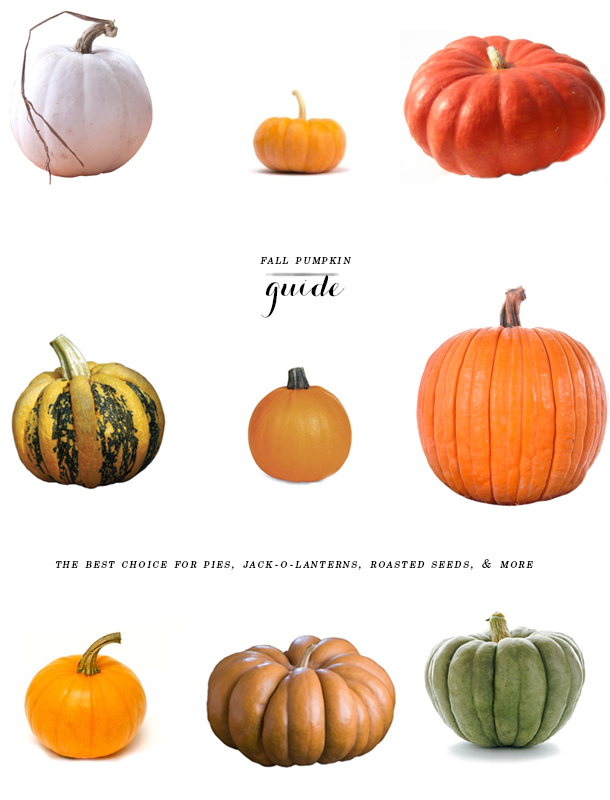 pumpkin guide