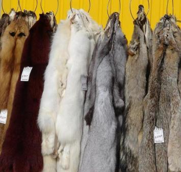 Enjoy Swiping Discount On Fur Coats For Sale EarningDiary