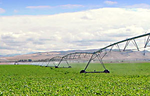 Irrigation can have a major cooling effect in some regions. Credit: U.S. Department of Agriculture.