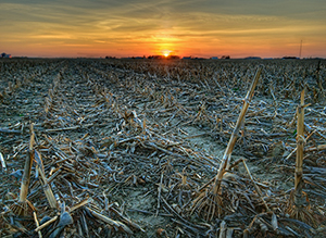 The U.S. corn belt and many other regions around the world may be at greater risk of drought by 2100 as warmer temperatures wring more moisture from the soil.