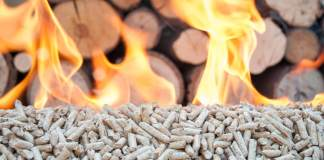 Good or Bad? An Essential Guide to Biomass Pros and Cons
