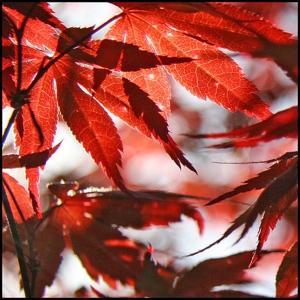 Fall-Season-autumn-leaves-31000