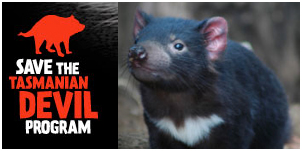 Image result for save the tasmanian devil