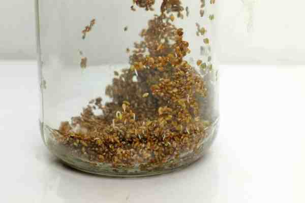 Rinse sprouting seeds with fresh water every day. they will Sprout within one or two days.
