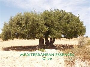 med olive