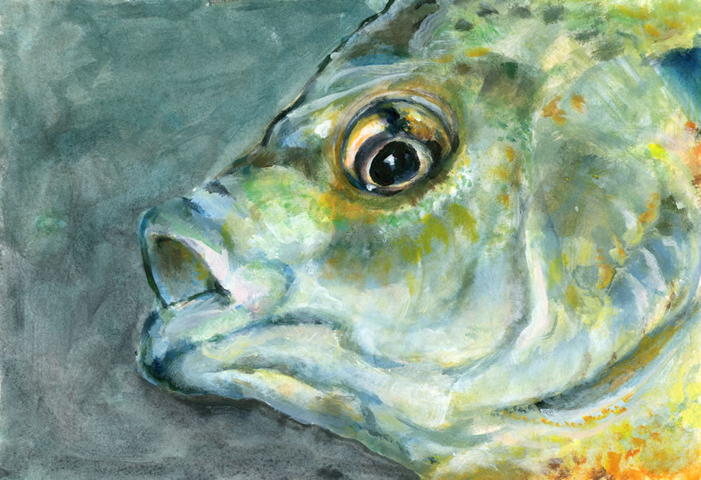 Image result for fish species painting