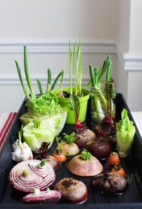 home garden veggie indoor