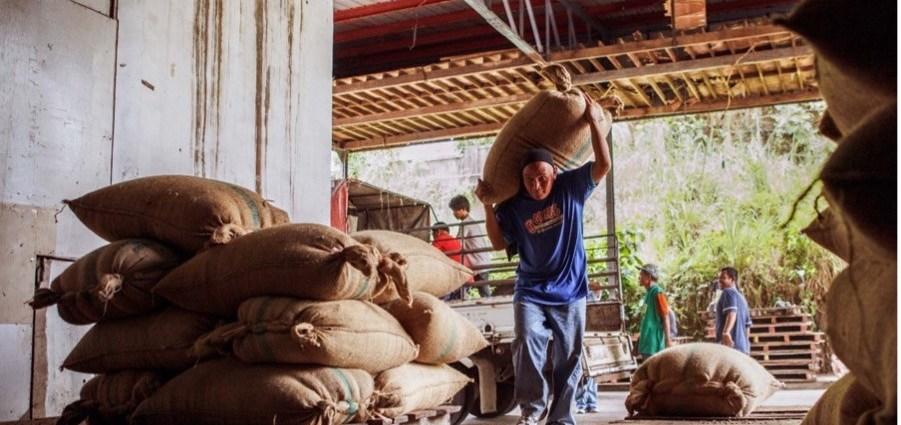 nestle coffee buying