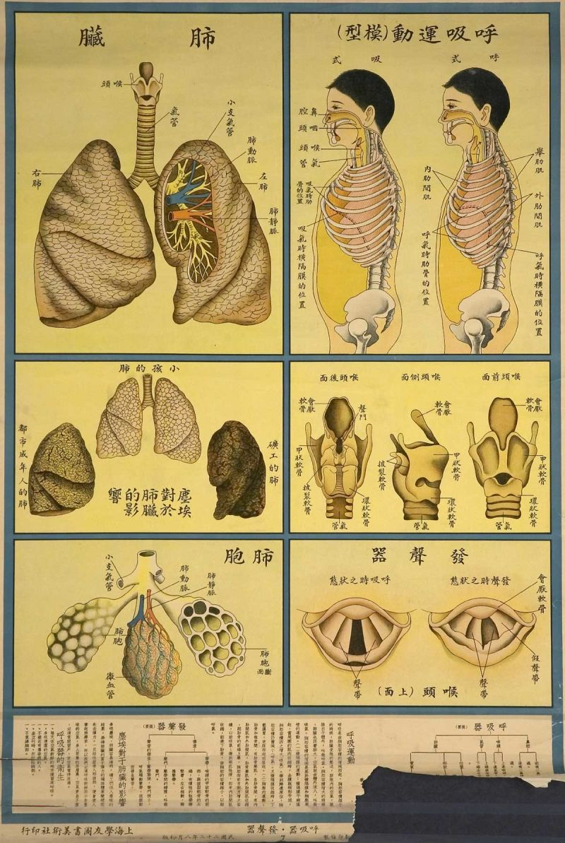 The Human Body As Industrial Factory On 1933 Chinese