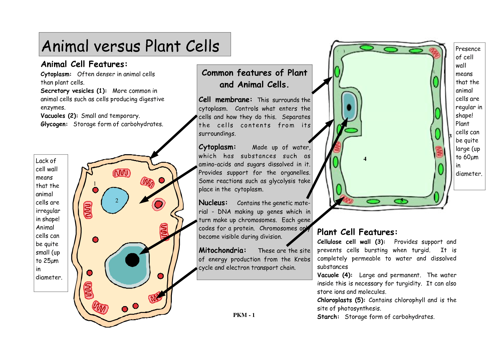 Plant Amp Animal Cell Printable