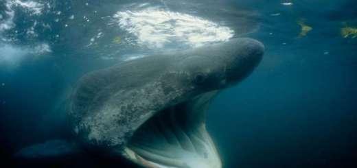 Swarms of Huge Strange Sharks Discovered along Northeastern US