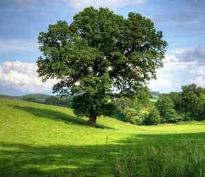importance-of-plants-earth-review-nayem-hasan-munna-bangladesh-soil-environmental-sciences