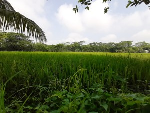 Causes-Organic-Matter-Decline-Bangladesh-Soil-Earth-Review-Nayem-Barisal-University