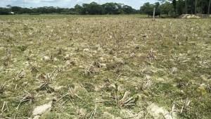 Causes-Organic-Matter-Decline-Bangladesh-Soils-earth-review