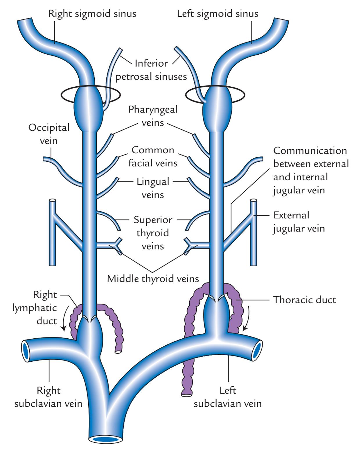 Jugular Foramen Mri Anatomy