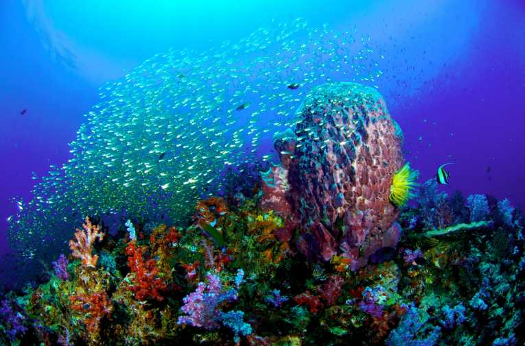 Image result for ocean corals