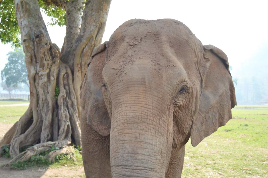 Elephant Nature Park – Chiang Mai, Thailand
