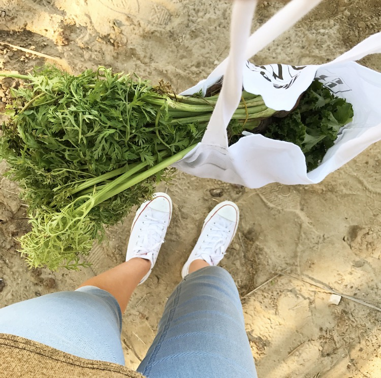 How 1 Vegan Meal A Week Makes A Difference: Living Vegan Zero Waste