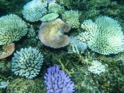 Snorkeling Fiji