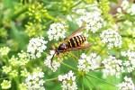 EwA at Habitat » Community-based Insect Life Science