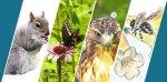 EwA at Fresh Pond » Pollinator Science  & Nature Journaling