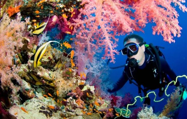 Go for Scuba Diving in Havelock Island