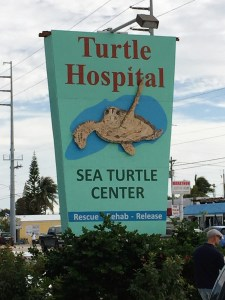 Turtle Hospital, Marathon, FL