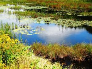 Pond Reflection - Great Pond, ME