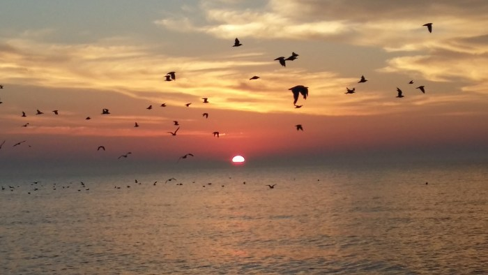 Gulls at sunrise, Lake Michigan