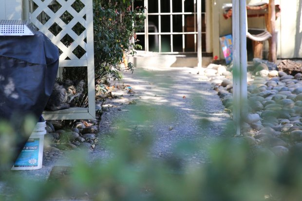 A cat is seen sitting under latticing at a home on Hastings Street in Fremont that has been deemed unsafe due to fire damage. Photo: Joseph Geha