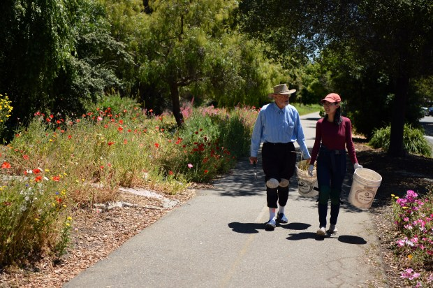Gil Patchett, left, and Shengyi Yue stroll along the Ohlone Greenway bike path as they tend to the wildflowers in El Cerrito, Calif. on Wednesday, May 17, 2017. Patchett has been planting and tending wildflowers in public spaces for some 20 years. (Kristopher Skinner/Bay Area News Group)