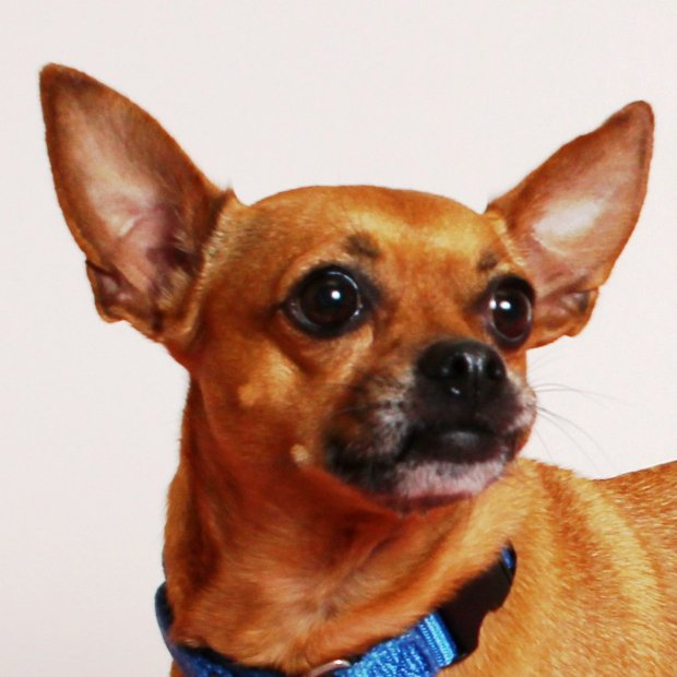 Emi is ARF's Pet of the Week.Courtesy of ARF