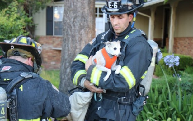 One person was hospitalized and two dogs were rescued after a house fire Monday evening on Carlton Avenue in Castro Valley. (Alameda County Fire Department)
