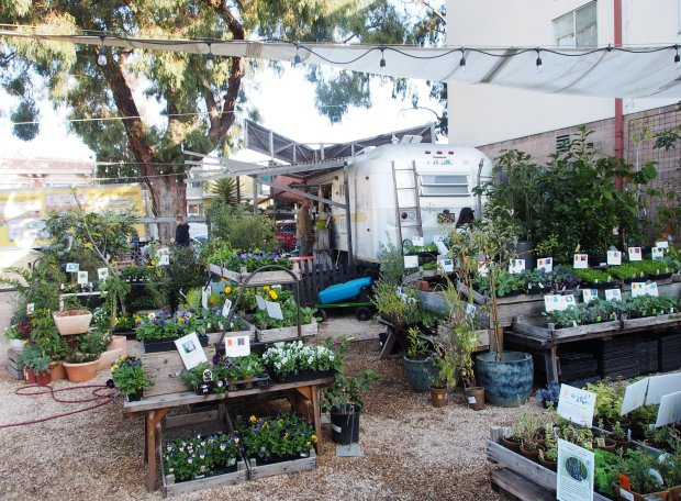 CHRIS TREADWAYAlong with plants and coffee specialties, Flowerland Nursery on Solano Avenue has gift items for leisurely browsing in a relaxed setting.