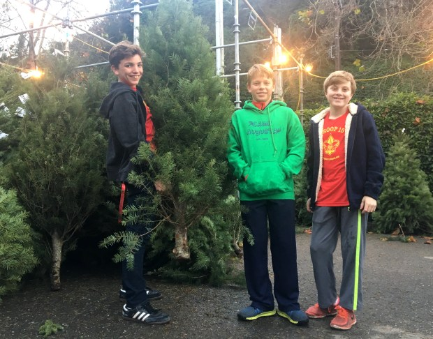 Jack Gross-Whitaker, from left, Nathan Fredericks and Jasper Tripp, all 13, take a break from helping out with trees at the Scouts Tree Lot in Piedmont.(Sarah Tan/For Bay Area News Group)