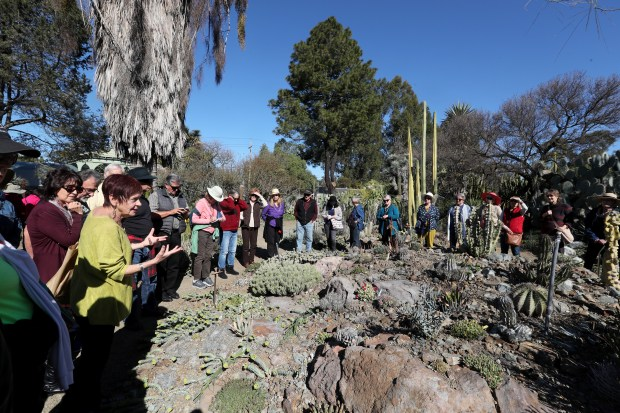 Visitors tour a section of the Ruth Bancroft Garden during a celebration of her life at the Ruth Bancroft Garden In Walnut Creek, Calif., on Saturday, Feb. 17, 2018. Bancroft, founder of the Ruth Bancroft Garden, died on November 26, 2017 at age 109. (Ray Chavez/Bay Area News Group)