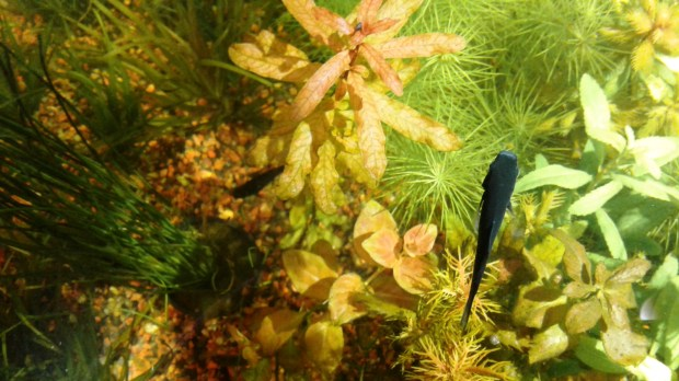 Fish swim in a tank at the Albany Aquarium, which is celebrating its 45th anniversary this year. (Damin Esper/For Bay Area News Group)