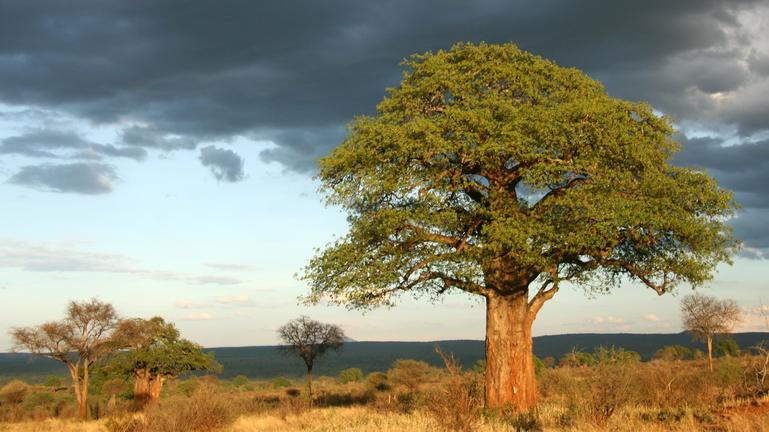 Tarangire National Park Wilderness