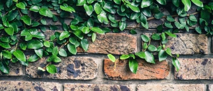 Brick Walls: Dewitt Sumberlin/Sumrell