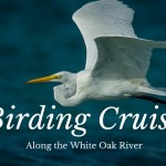 Birding Cruise on the White Oak River