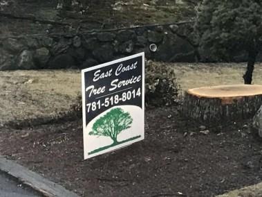 013-Tree-Services-East-Coast-Tree